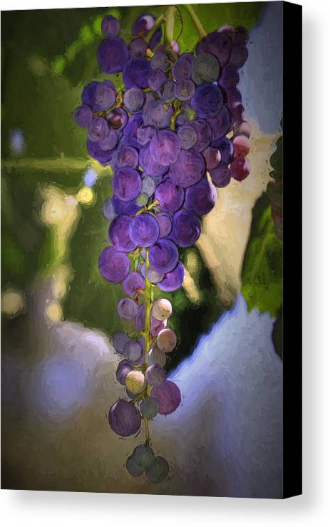 Grape Canvas Print featuring the photograph Fruit Of The Vine by Donna Kennedy