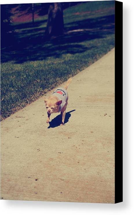 Dogs Canvas Print featuring the photograph Full Speed Ahead by Laurie Search