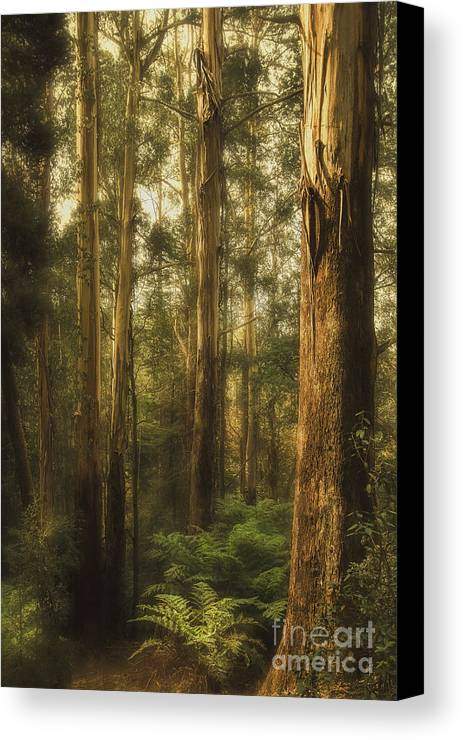Gum Canvas Print featuring the photograph Ghostly by Andrew Paranavitana