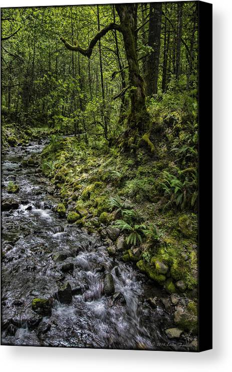 Creek Canvas Print featuring the photograph Gorton Creek by Erika Fawcett