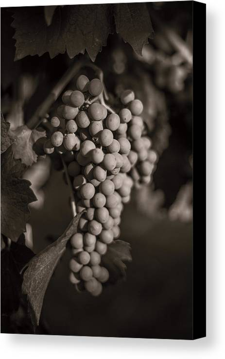 Fine Art Canvas Print featuring the photograph Grapes In Grey 2 by Clint Brewer