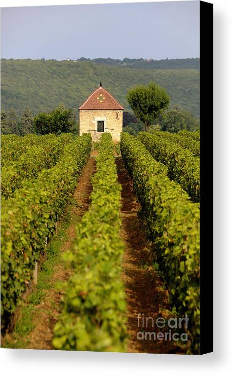 Architectures  Canvas Print featuring the photograph Grapevines. Premier Cru Vineyard Between Pernand Vergelesses And Savigny Les Beaune. Burgundy. Franc by Bernard Jaubert