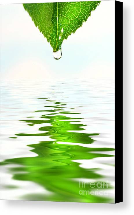 Background Canvas Print featuring the photograph Green Leaf Over Water Reflection by Sandra Cunningham