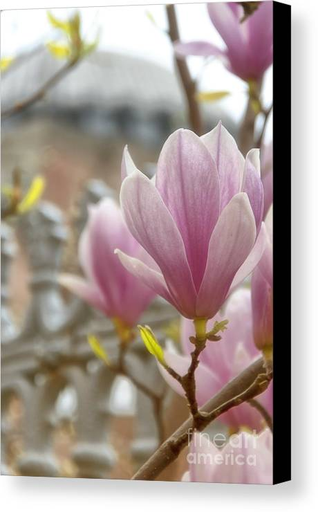 Hagia Canvas Print featuring the photograph Hagia Sophia Magnolia by Antony McAulay