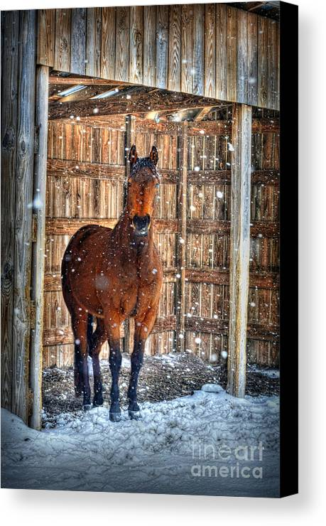Horse Canvas Print featuring the photograph Horse And Snow Storm by Dan Friend