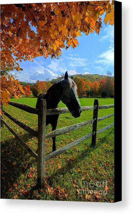 Horse Canvas Print featuring the photograph Horse Under Tree By Fence by Dan Friend