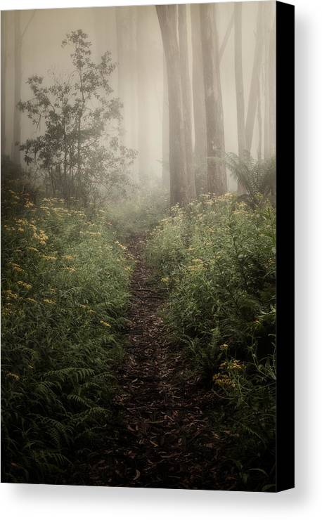 Fog Canvas Print featuring the photograph In Silence by Amy Weiss