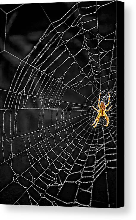 Bugs Canvas Print featuring the photograph Itsy Bitsy Spider My Ass 3 by Steve Harrington