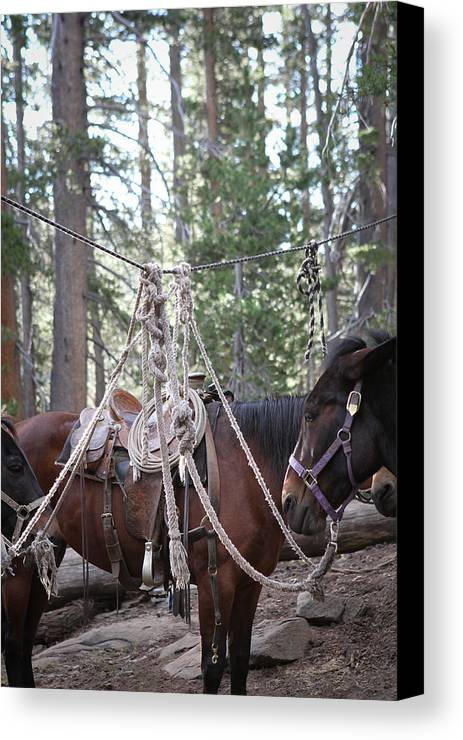 Knots Canvas Print featuring the photograph Knots by Diane Bohna