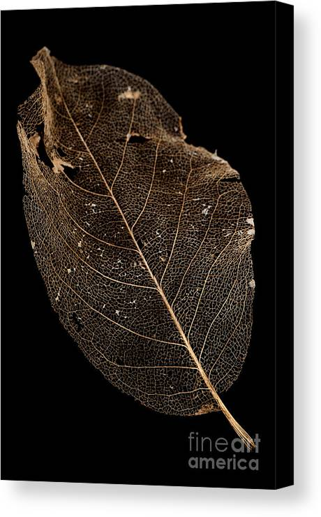 Background Canvas Print featuring the photograph Leaf Lace by Anne Gilbert