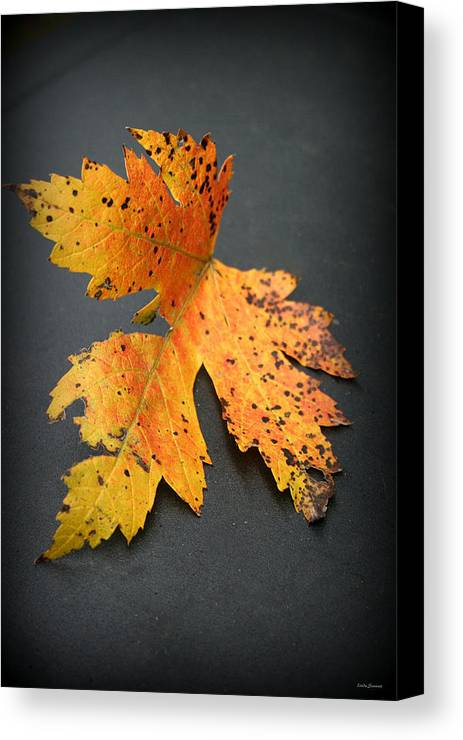 Nature Canvas Print featuring the photograph Leaf Portrait by Linda Sannuti