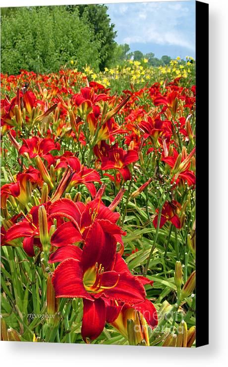 Daylilies Canvas Print featuring the photograph Lily Patch by Regina Geoghan