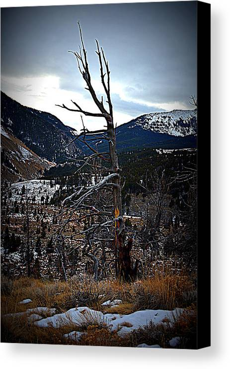 Tree Canvas Print featuring the photograph Lonesome Existence by Miss Judith