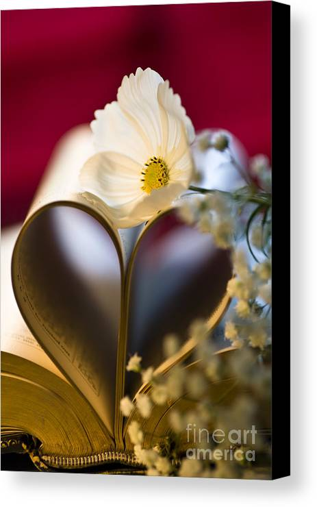 Anniversary Canvas Print featuring the photograph Love Is All Around by Jan Bickerton