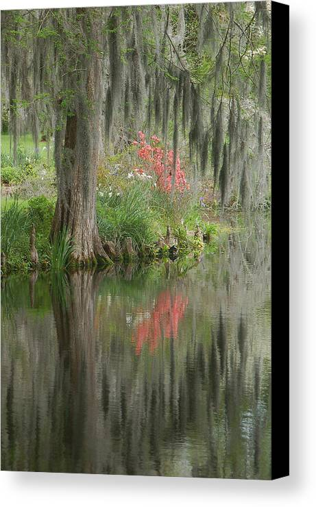 Lowcountry Canvas Print featuring the photograph Lowcountry Series I by Suzanne Gaff