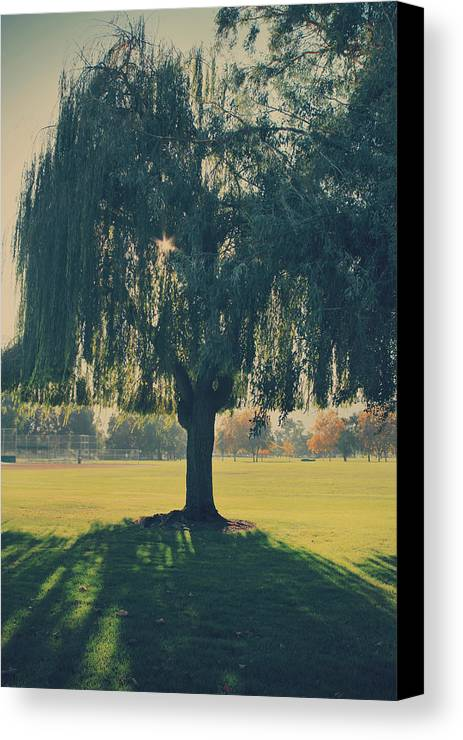 Trees Canvas Print featuring the photograph Maybe We'll Find It Someday by Laurie Search