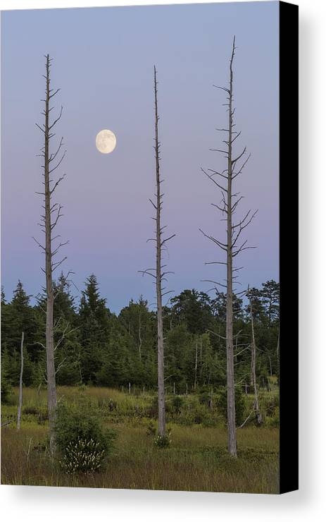 Moon Canvas Print featuring the photograph Moon Before Nightfall by Denise Bush