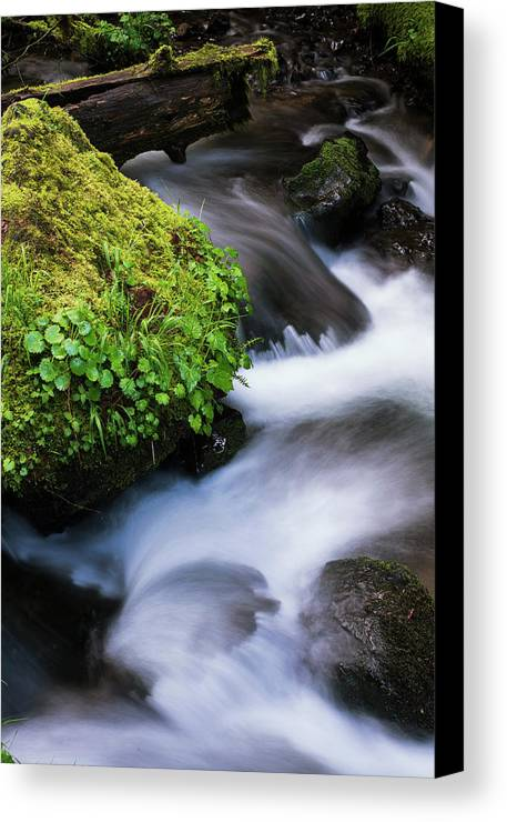 Motion Canvas Print featuring the photograph Munson Creek Flows Through The Forest by Robert L. Potts