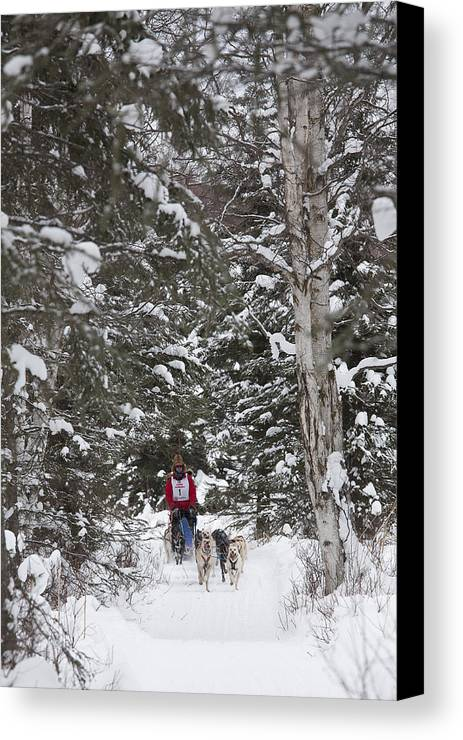 Adult Canvas Print featuring the photograph Musher In The Forest by Tim Grams