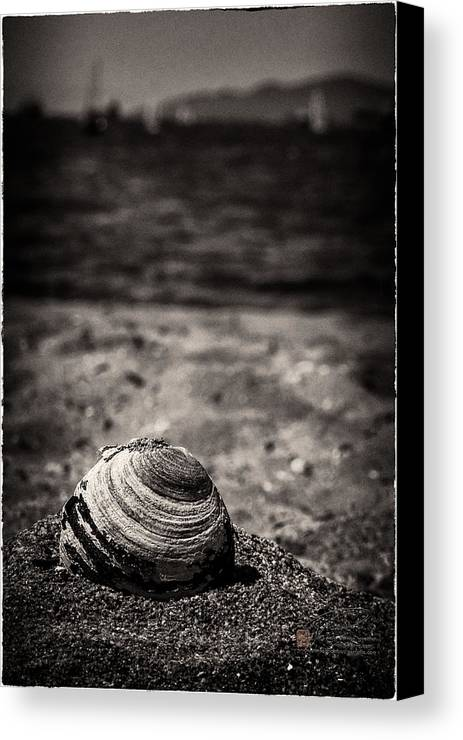 Beach View Canvas Print featuring the photograph Mussel On The Beach by Peter v Quenter