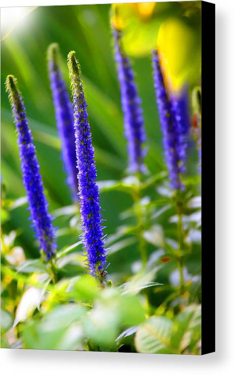 Abstract Canvas Print featuring the photograph Nature Surprises by Martin Joyful