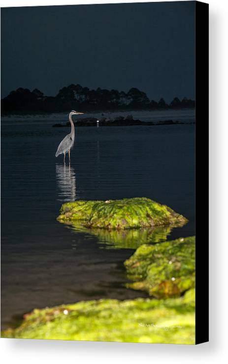 Heron Canvas Print featuring the photograph Night Stalker by Volker blu Firnkes