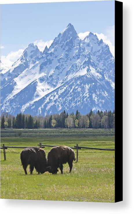Grand Tetons Canvas Print featuring the photograph No Butts About It by Charles Warren