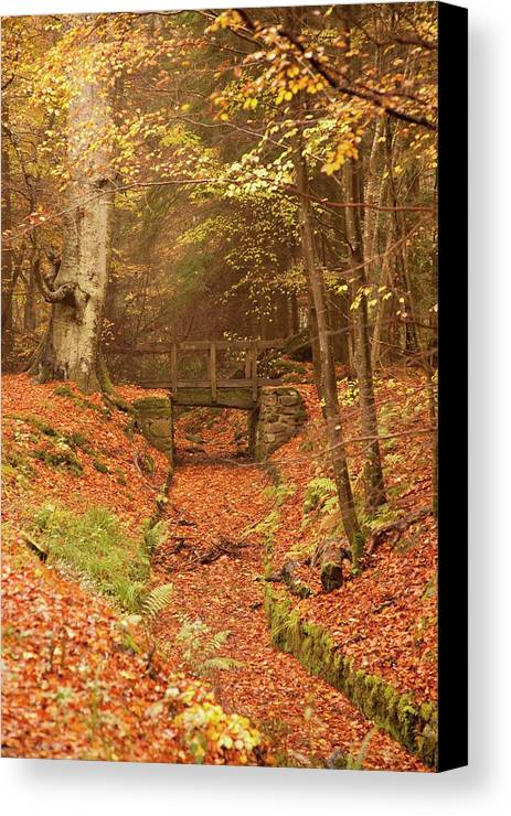 Bridge Canvas Print featuring the photograph Northumberland, England A Creek by John Short