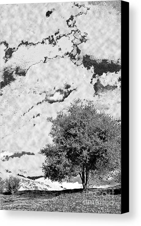 Photography Canvas Print featuring the photograph Oak On A Hill Blk And Wht by Gary Brandes