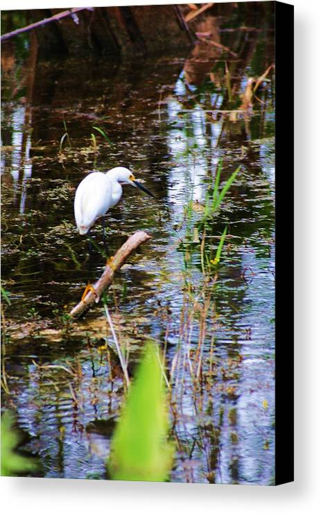 Egret Canvas Print featuring the photograph On The Edge by Chuck Hicks