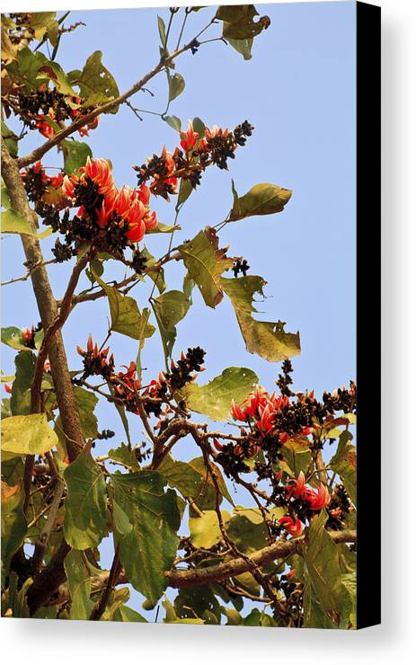 Vertical Canvas Print featuring the photograph Orange Blossom Of The Kesuda by Kantilal Patel