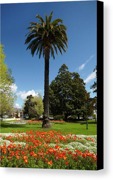Blenheim Canvas Print featuring the photograph Palm Tree And Flower Gardens, Seymour by David Wall