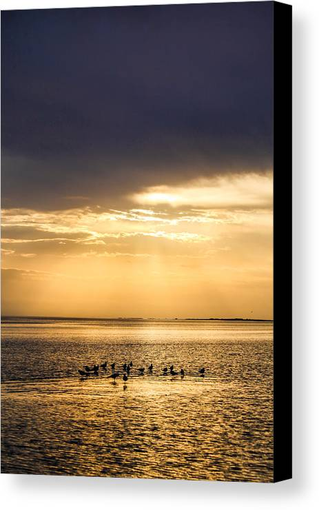 Cedar Island Canvas Print featuring the photograph Pirates Gold by Paula OMalley