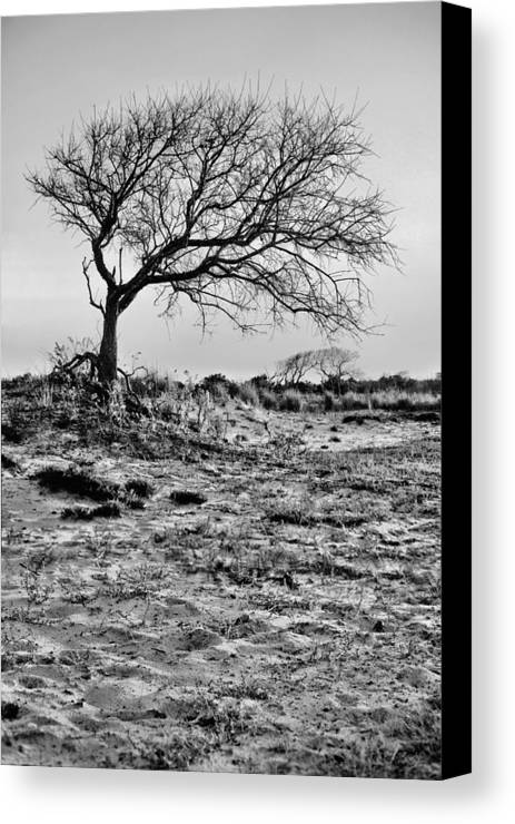 Assateague Island Canvas Print featuring the photograph Prevailing Bw by JC Findley