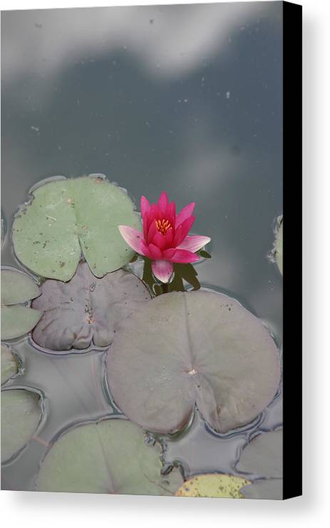 Lilly Canvas Print featuring the photograph Red Lilly by Dervent Wiltshire