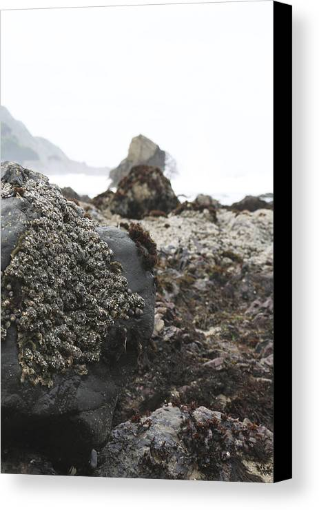 Rocks Canvas Print featuring the photograph Rocky by Nishani Pierre-louis