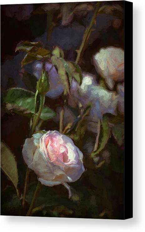 Floral Canvas Print featuring the photograph Rose 122 by Pamela Cooper