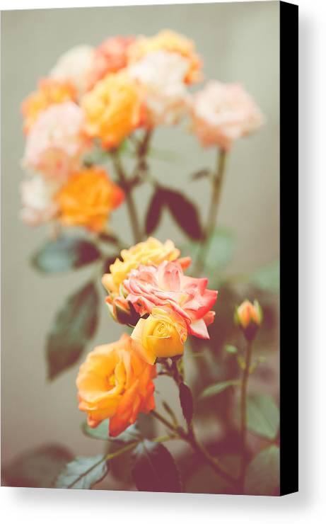 Rose Canvas Print featuring the photograph Rumba Rose by Ari Salmela