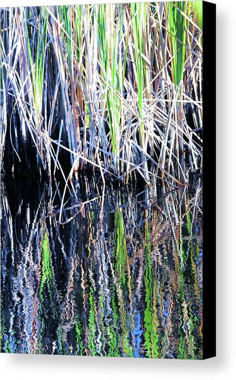 Landscape Canvas Print featuring the photograph Sawgrass Reflections by Kicking Bear Productions