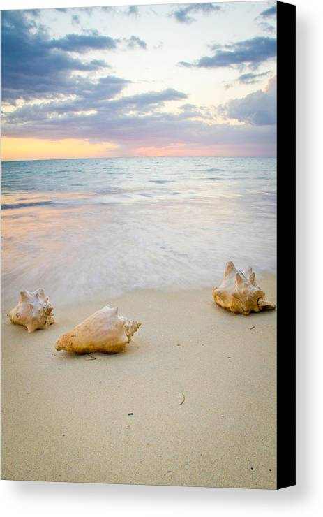 Jamaica Canvas Print featuring the photograph Sea Shells At Sunset by Nersibelis Photography