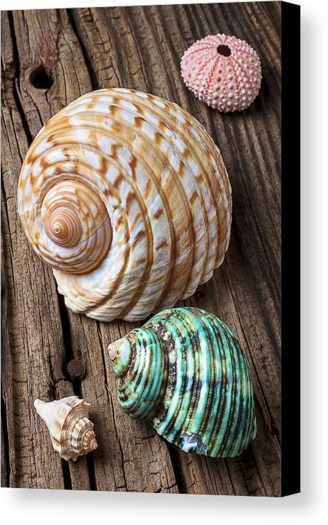 Sea Shell Canvas Print featuring the photograph Sea Shells With Urchin by Garry Gay