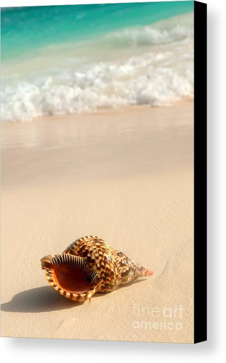 Seashell Canvas Print featuring the photograph Seashell And Ocean Wave by Elena Elisseeva