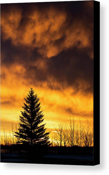 Outdoors Canvas Print featuring the photograph Silhouetted Evergreen Tree by Michael Interisano