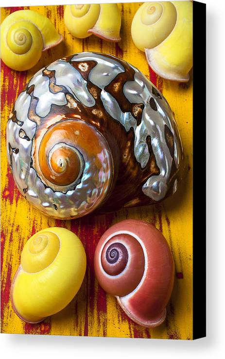 Six Canvas Print featuring the photograph Six Snails Shells by Garry Gay