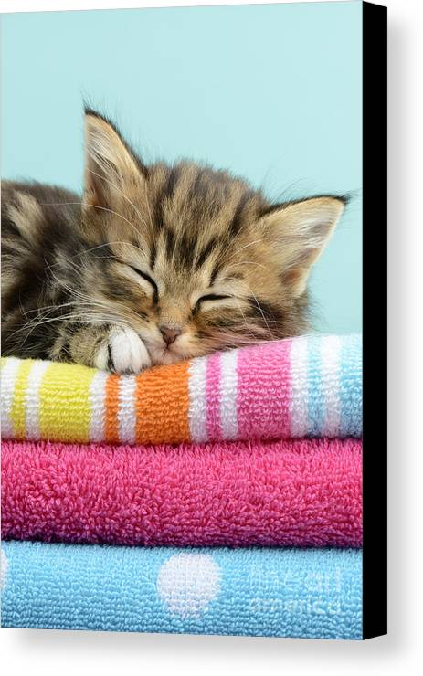 Tabbies Canvas Print featuring the digital art Sleepy Kitten by Greg Cuddiford