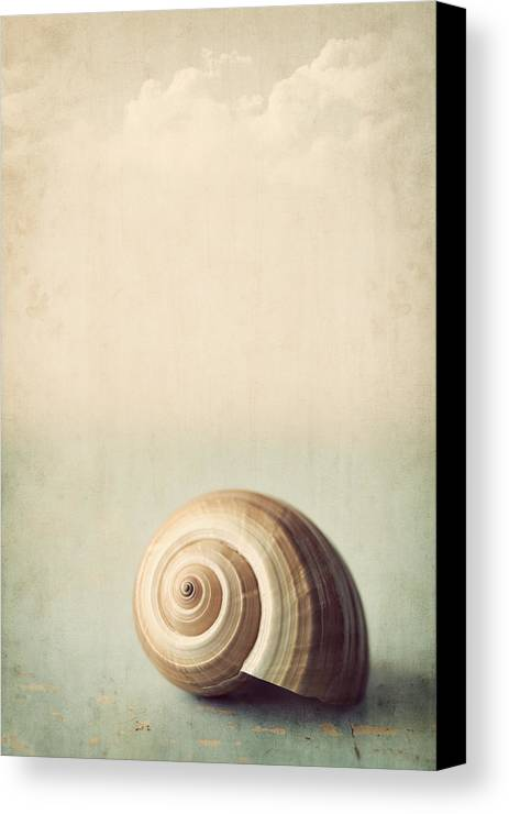 Shell Canvas Print featuring the photograph Sojourn by Amy Weiss