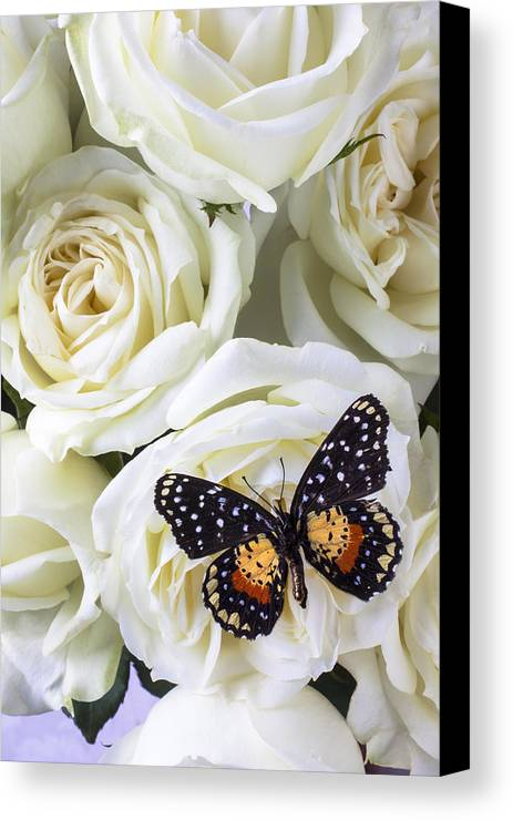 Speckled Butterfly Canvas Print featuring the photograph Speckled Butterfly On White Rose by Garry Gay