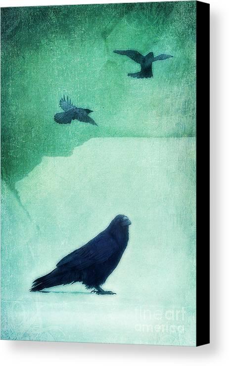 Raven Canvas Print featuring the photograph Spirit Bird by Priska Wettstein