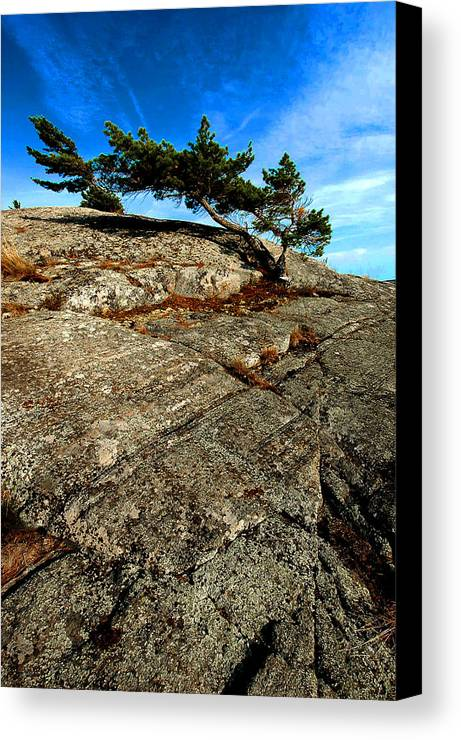 Canada Canvas Print featuring the photograph Strong Tree by Patrick Boening