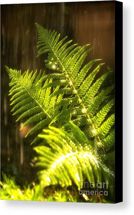 Fern Canvas Print featuring the photograph Summer Rain by Jane Rix
